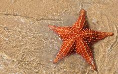 starfish-1.jpg (2560×1600)