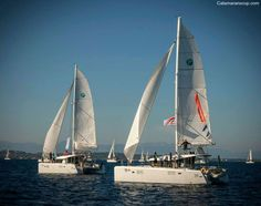 Sailing Catamaran, Opera House, Link, Opera