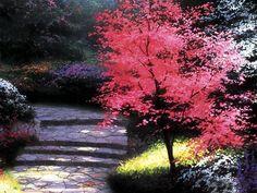 Along the Lighted Path 11 Thomas Kinkaid