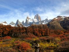 El Chalten, Argentina | Fall foliage with Mount Fitz Roy Glacier in the background