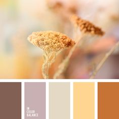 In Color Balance ( Living Room Color Schemes, Colour Schemes, Color Combos, Palettes Color, Colour Pallette, Color Harmony, Color Balance, Belleza Natural, Color Theory