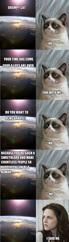 Grumpy Cat reincarnated.