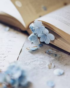 Book Aesthetic, Flower Aesthetic, Aesthetic Photo, Book Photography, Creative Photography, Photos Amoureux, Photographie Portrait Inspiration, Book Flowers, Coffee And Books