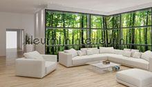 View through window on forest fotobehang 443VEE Bijzonder fotobehang Kleurmijninterieur