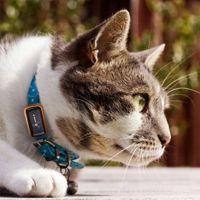 Che ne dici di un bel GPS per animali domestici? Ora saprai sempre dove si trova il tuo animaletto preferito.  #gps #regali #regalo #tecnologia #tecnologico #gatto #domestico