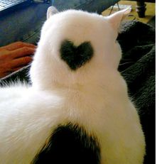 69 Valentine Cats with Fur Hearts You'll Fall Hopelessly in Love With