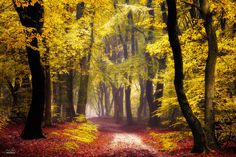 Autumn Forest Is Prettiest In Czechia Thanks To Photographer Janek Sedlář Autumn Forest, Autumn Trees, Tree Photography, Landscape Photography, Tree Leaves, Great Photographers, Painting Inspiration, Mother Nature, Northern Lights