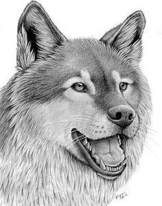 Wolf Portrait by sarahfinnigan.deviantart.com on @deviantART