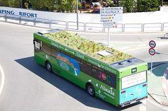 Les bus madrilènes ont désormais de la végétation sur leurs toits... Une initiative astucieuse pour lancer un nouvel écosystème urbain