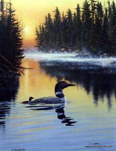 Wildlife Artist Derk Hansen Unframed Loon Print Land Of The Free Loon | WildlifePrints.com