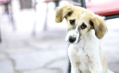 Harry Reid Blocks Bipartisan Animal Cruelty Bill Over Political Nonsense