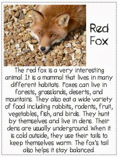 What does the fox say? {finding the main idea and details in a passage}