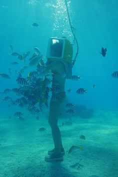 a65ad08665 AquaSafari underwater adventure in either Bora Bora or Moorea. As you walk  along the sandy