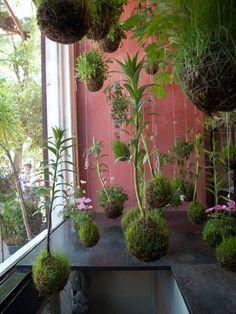 Japanese kokedama string garden
