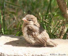 https://veganfordummies.files.wordpress.com/2008/09/baby-sparrow2.jpg