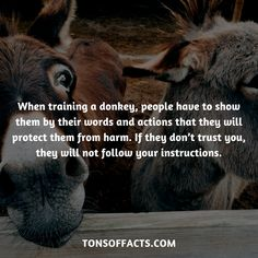 28 Bizarre And Weird Facts About Donkeys - Tons Of Facts Dolphin Facts, Whale Facts, Dinosaur Facts, Lion Facts, Tiger Facts, Cat Facts, Fun Facts About Animals, Animal Facts, Dear Mom And Dad