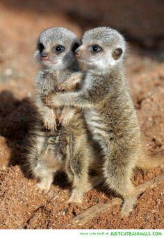 Big Hugz!