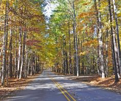Road through fall colors at William B. Umstead State Park - Raleigh, NC in November, 2013.