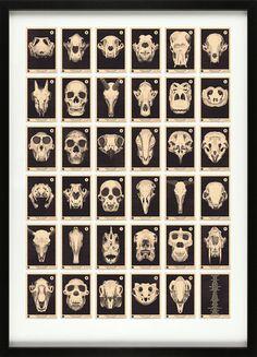 Skulls A to Z