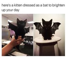 Pictures of the Day – Top 50 Funny Internet Cat Memes - Katzen Cute Animal Memes, Cute Funny Animals, Funny Animal Pictures, Cute Baby Animals, Funny Cute, Cute Dogs, Funny Pics, Top Funny, Cute Kittens