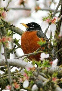 """I love when Dad tells the story about """"Robbie"""" and competing with him to see who sees the first robin in Spring!"""