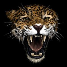 Animal Jaguar, Jaguar Leopard, Jungle Animals, Animals And Pets, Cute Animals, Most Beautiful Animals, Majestic Animals, Jaguar Wallpaper, Lions Photos