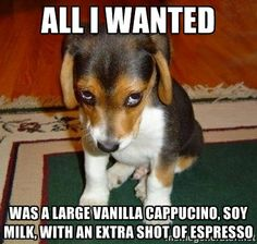 Sad Puppy - all I wanted was a large vanilla cappucino, soy milk, with an extra shot of espresso