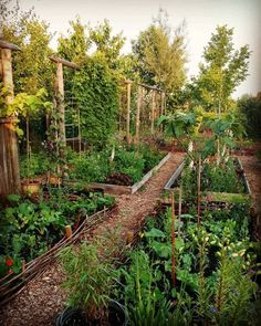 enjoying growing more vegetables this year. We have 3 borders for grow… - Modern We're enjoying growing more vegetables this year. We have 3 borders for growWe're enjoying growing more vegetables this year. We have 3 borders for grow Garden Cottage, Garden Beds, Garden Walls, Farm Gardens, Outdoor Gardens, School Gardens, Small Gardens, Amazing Gardens, Beautiful Gardens