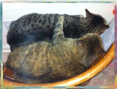 My 2 fat cats, sister Miley Mae hugging brother Billy Ray. 11/5/13