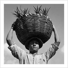 On a pineapple plantation. Manati, Puerto Rico. (Jack Delano, 1942)
