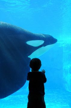A little boy watches Tilikum from the underwater viewing point.