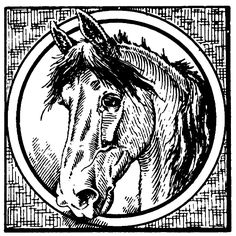 Clipart Vintage Black And White Horse Through A Circle - Royalty Free Vector Illustration by Prawny Vintage Horse Face, Horse Head, Horse Clip Art, Horse Clipping, Clip Art Pictures, Free Vector Illustration, Vintage Horse, Vector Graphics, Canvas Art Prints