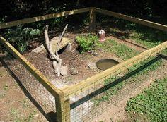 Tortoise Enclosure Example