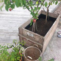 foto: Sofia A, fialinsstil.blogspot.se    Fint att sätta träd i en stor låda!