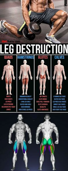 Did you skip leg day? But focus on the upper-mirror muscles alone and your spagh… Did you skip leg day? But focus on the upper-mirror muscles alone and your spaghetti legs will not only attract some less than welcoming looks… Continue Reading → Quads And Hamstrings, Glutes, Dumbbell Leg Workout, Dumbbell Exercises, Band Exercises, Butt Workout, Glute Kickbacks, Leg Day, Glute Bridge