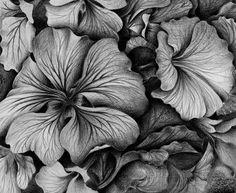 de-lirios Botanical Illustration, Illustration Art, Pencil Drawings Of Flowers, Ink Drawings, Spanish Artists, A Level Art, Polychromos, Pin Art, Diana