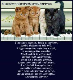 Pictures, Animals, Photos, Animales, Animaux, Photo Illustration, Animal Memes, Animal, Resim