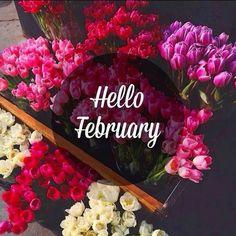 Bienvenido querido Febrero. Que el amor que se celebra en este mes sea para todo el año. #amor #amistad #sinceridad #union #allweneedislove  #february