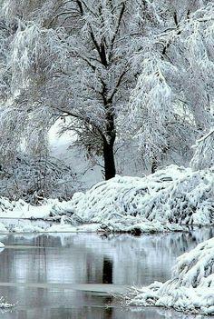 beautiful tree in winter Winter Szenen, I Love Winter, Winter Magic, Winter Time, Winter Christmas, Snow Pictures, I Love Snow, Snow Photography, Winter Photos