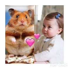 Awww! Princess Charlotte loves family hamster Marvin - especially his whiskers tickling her face Mum Kate revealed. +++Breaking Royal Pet News today+++ // HRH Duchess of Cambridge, May/01/2016