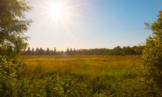 A meadow at Minto-Brown Island Park on a late summer evening, Salem Oregon