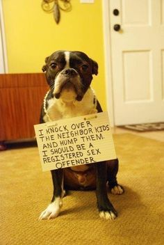""""""" I knock over the neighbor kids and hump them.  I should be a registered sex offender """" dog shaming"""