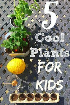 Fun gardening activities for kids. Great plants for kids and easy tips for gardening with kids.