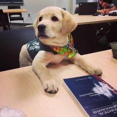 """Am I supposed to know how to read to do this job?"" 