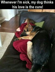 Wicked Training Your German Shepherd Dog Ideas. Mind Blowing Training Your German Shepherd Dog Ideas. Love My Dog, Cute Funny Animals, Funny Dogs, Funny Humor, Cute Puppies, Cute Dogs, Corgi Puppies, German Shepherd Puppies, Funny German Shepherds