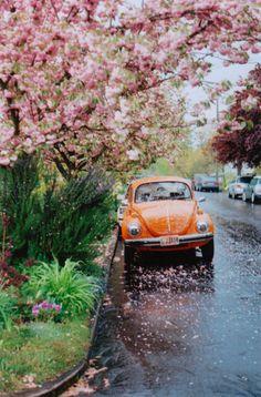 when it rains flowers