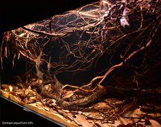 Biotope Aquarium, Cichlid Aquarium, Nano Aquarium, Aquarium Design, Aquarium Landscape, Nature Aquarium, Planted Aquarium, Aquascaping, Fish Tank Terrarium