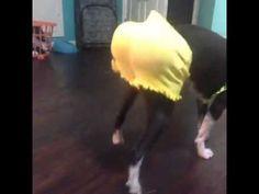 Dog be twerking better than Miley Cyrus XD