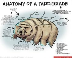 Anatomy of a Tardigrade @mikebentaylor