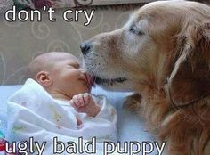 Don't cry ugly bald puppy